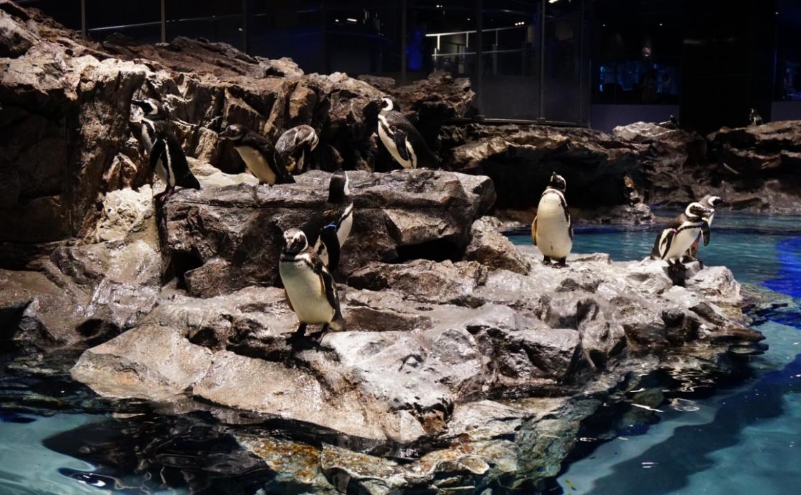 東京都内のいまどき水族館